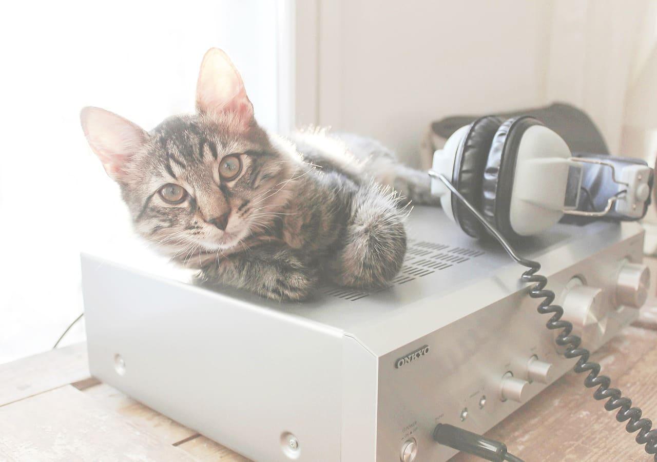 Gadgets tecnológicos para mascotas